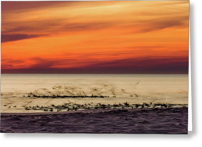 Sunset Flock Greeting Card