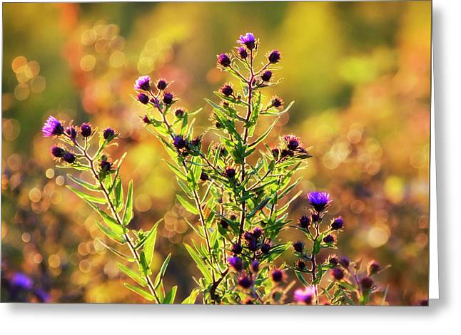 Greeting Card featuring the photograph Sunset Flowers by Christina Rollo