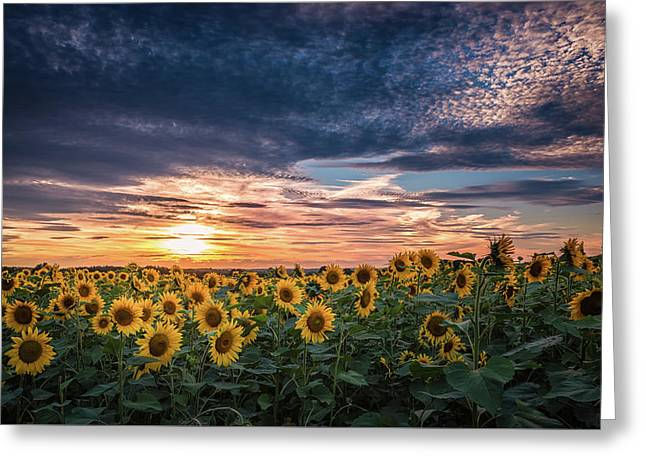 Sunset For Wishes Greeting Card by Kim Carpentier