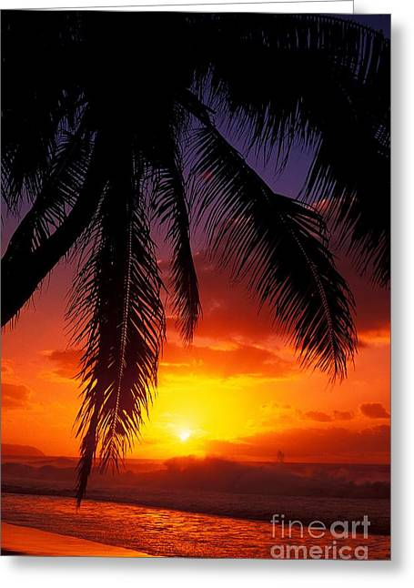 Sunset From The Beach Greeting Card by Vince Cavataio - Printscapes