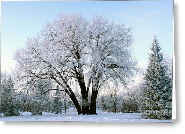 Sunset Frost Greeting Card by Steve Augustin
