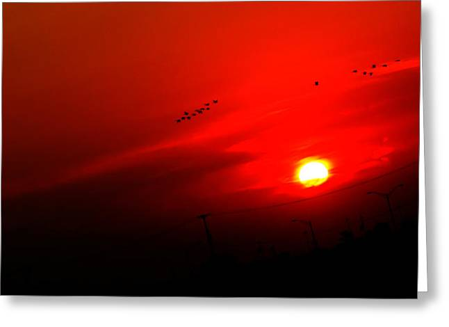 Sunset Geese Leaving Disappearing City - 0814  Greeting Card