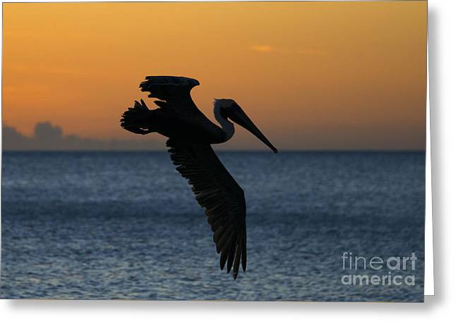 Sunset Glide Greeting Card by Mike Dawson