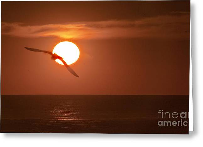 Sunset Gull No.1 Greeting Card by Scott Evers