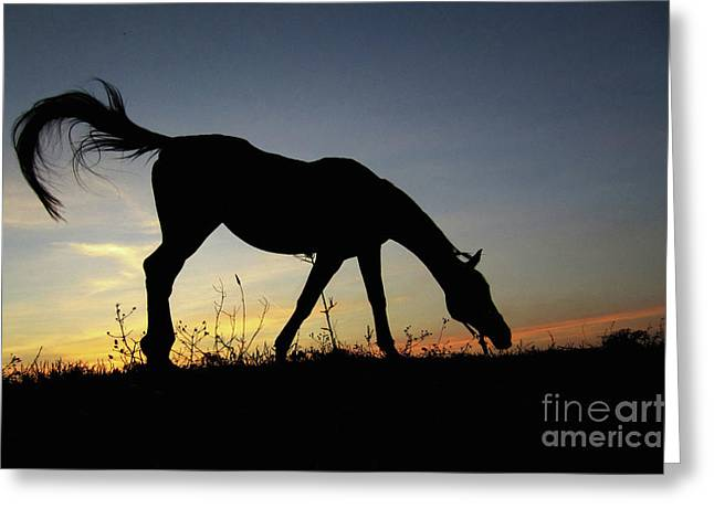 Sunset Horse Greeting Card