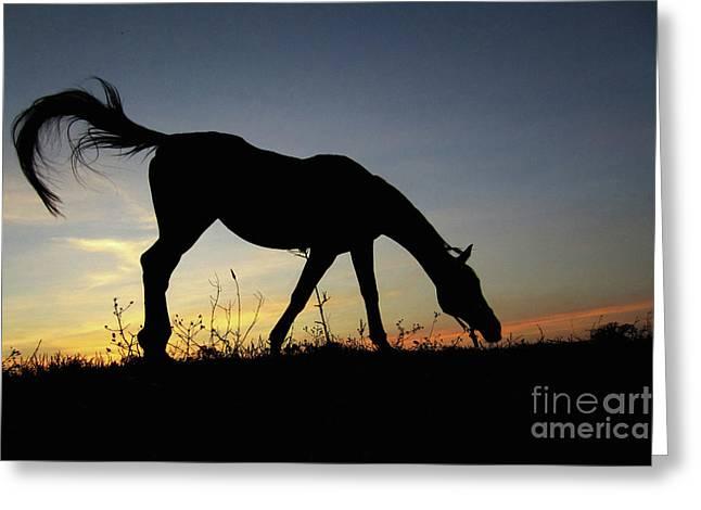 Sunset Horse Greeting Card