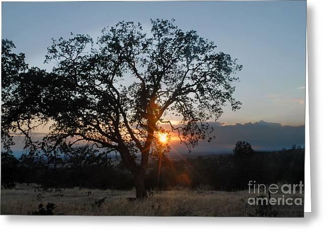Sunset In Chico Greeting Card by Richard Verkuyl