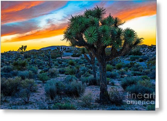 Sunset In Joshua Tree Greeting Card