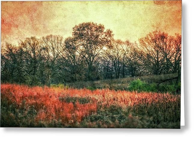 Sunset In Orange At Retzer Nature Center Greeting Card by Jennifer Rondinelli Reilly - Fine Art Photography