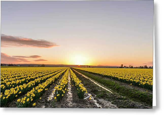 Sunset In Skagit Valley Greeting Card