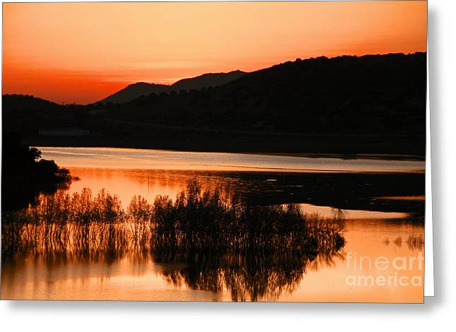 Olive Pyrography Greeting Cards - Sunset in the Andalusian Guadalquivir River Greeting Card by Begonia Mallenco