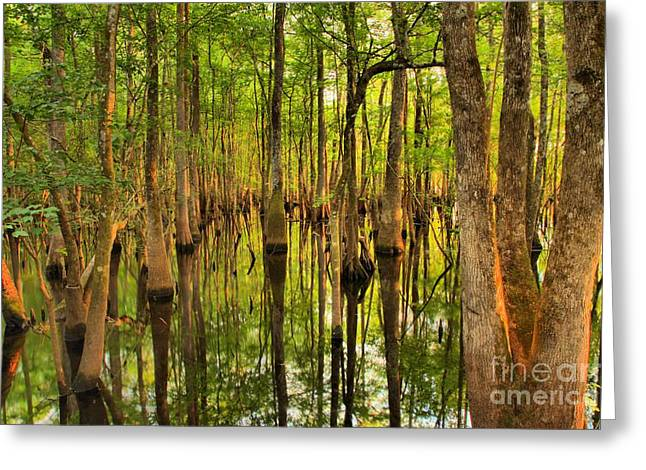 Sunset In The Florida Cypress Greeting Card by Adam Jewell