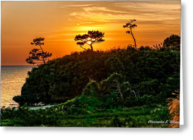 Sunset In The Tree Greeting Card by Christopher Holmes