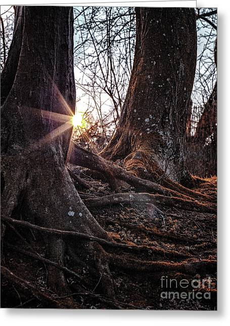 Sunset In The Woods Greeting Card