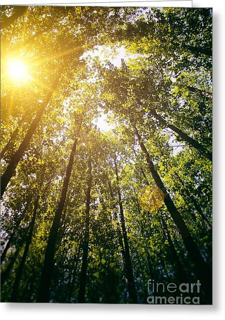Sunset In The Woods Greeting Card by Carlos Caetano