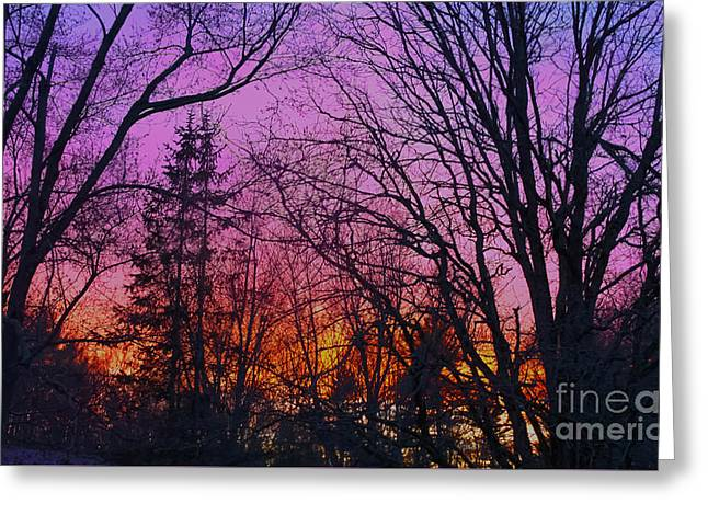 Sunset In The Woods-hdr Greeting Card