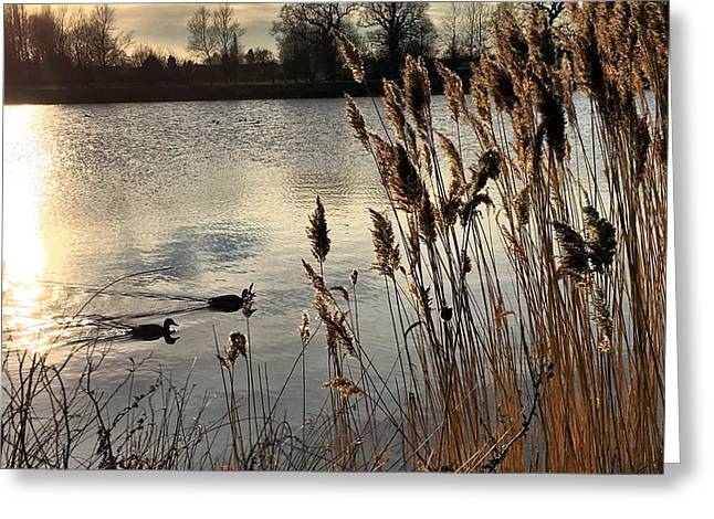 Sunset Lake  Greeting Card by Kathy Spall