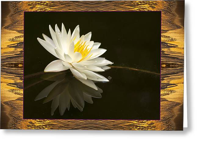 Sunset Lily Greeting Card by Bell And Todd