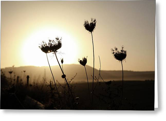 Greeting Card featuring the photograph Sunset On Galilee Road by Yoel Koskas