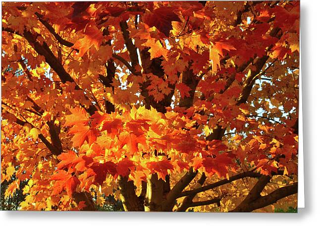 Greeting Card featuring the photograph Sunset On Sugar Maple by Ray Mathis