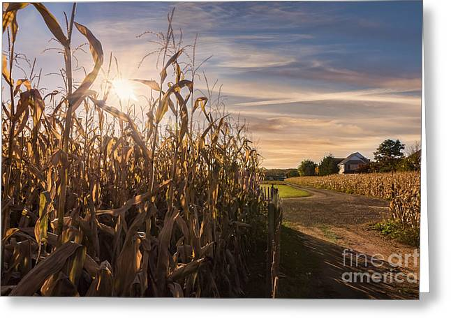 Sunset On The Corn Field Greeting Card