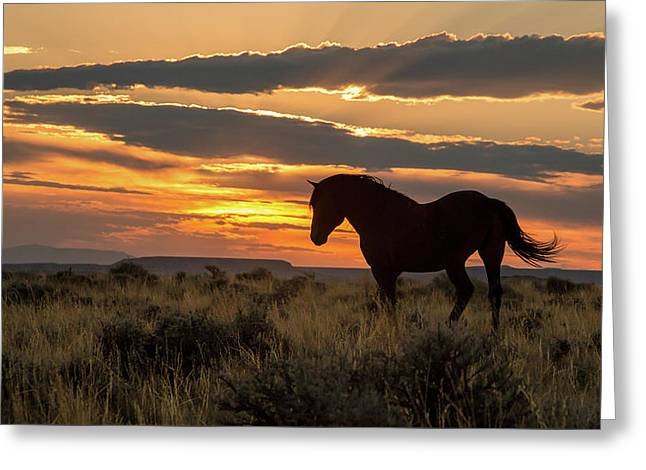 Sunset On The Mustang Greeting Card by Jack Bell