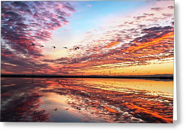 Sunset On The Pacific Flyway Greeting Card
