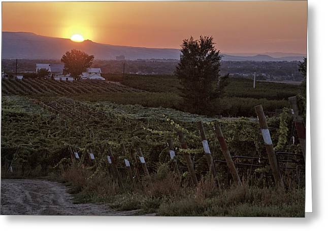 Sunset Over Colorado Vineyard Greeting Card