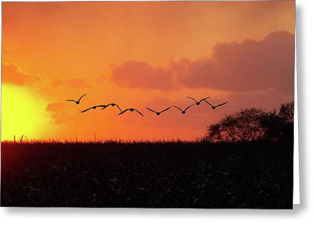 Sunset Over Easy Greeting Card by Sue Stefanowicz