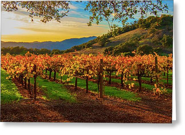 Sunset Over Gamble Vineyards Greeting Card by Jon Neidert