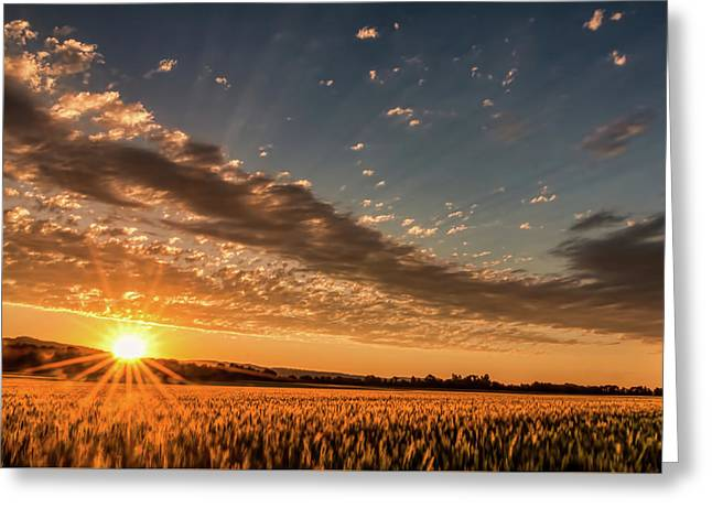 Sunset Over The Golden Meadow Greeting Card
