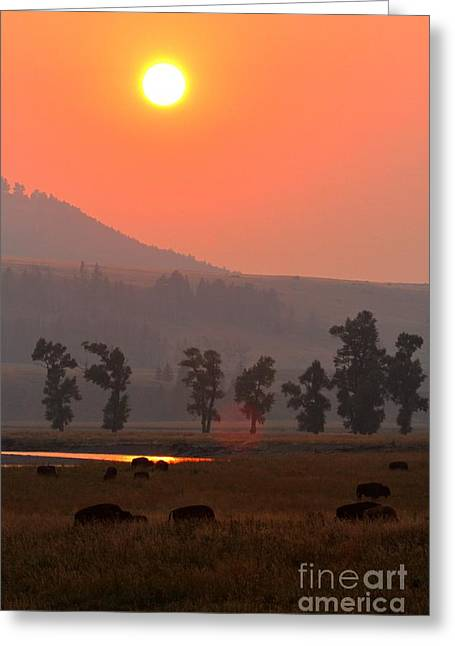 Sunset Over The Herd Greeting Card by Adam Jewell