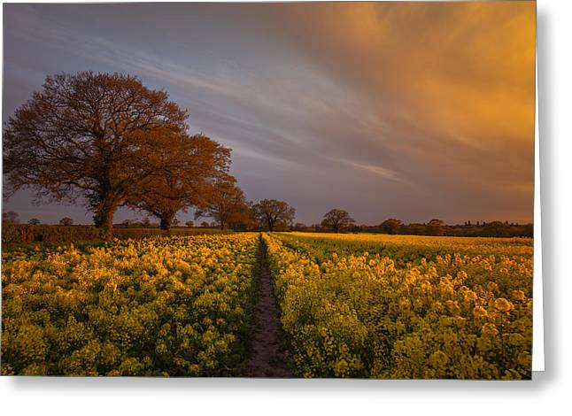 Sunset Over The Rapeseed Field Greeting Card by Chris Fletcher