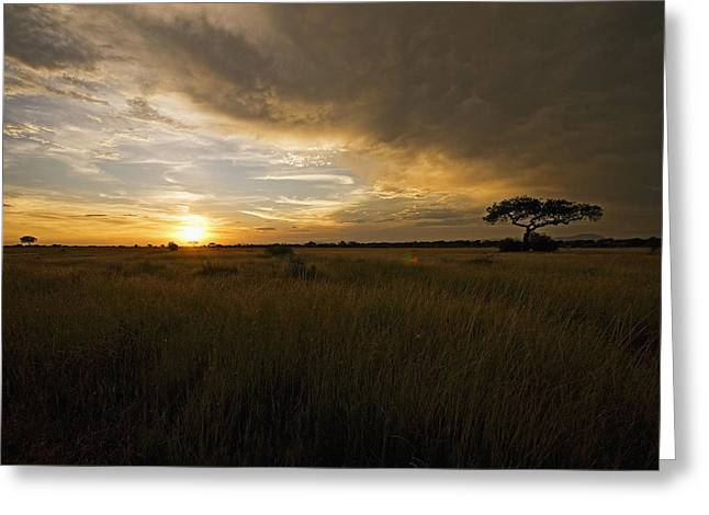 sunset over the Serengeti plains Greeting Card
