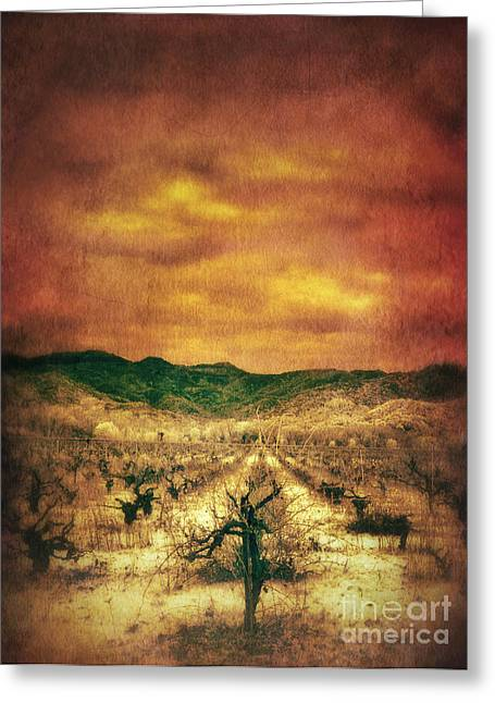 Sunset Over Vineyard Greeting Card by Jill Battaglia