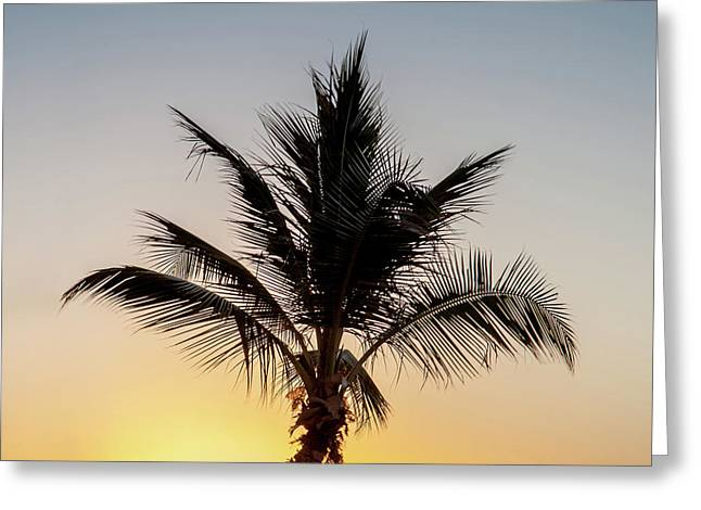 Greeting Card featuring the photograph Sunset Palm by Az Jackson