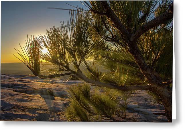 Sunset Pines Greeting Card