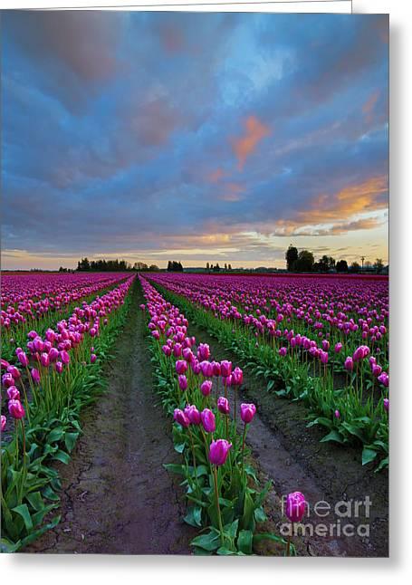 Sunset Pink Greeting Card