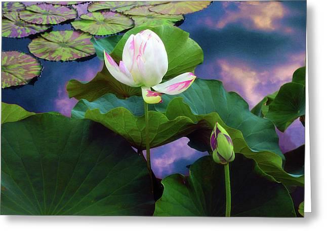 Sunset Pond Lotus Greeting Card