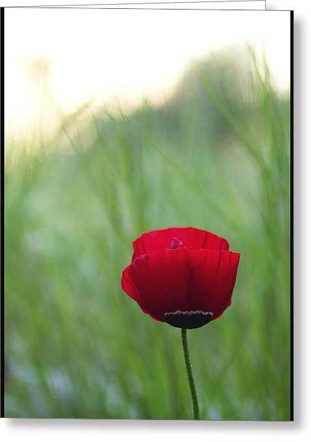 Sunset Poppy Greeting Card by Julia Bridget Hayes