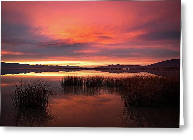 Sunset Reeds On Utah Lake Greeting Card