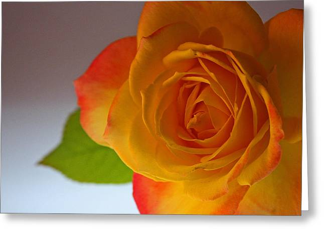 Sunset Rose Greeting Card by Bobby Villapando