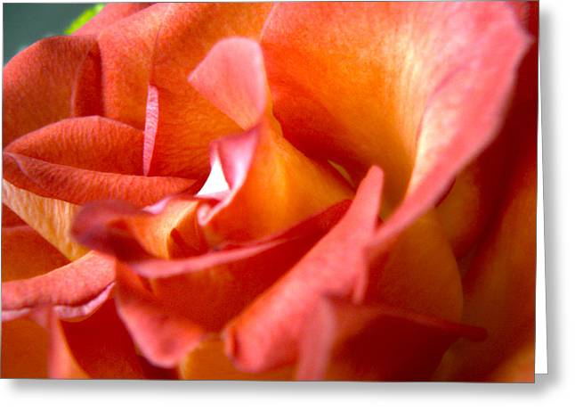 Sunset Rose One Greeting Card by Abigail Markov