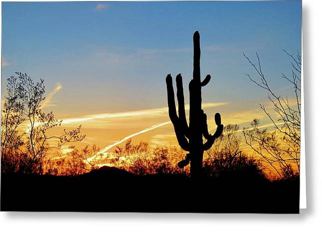 Sunset Saguaro In The Spring Greeting Card
