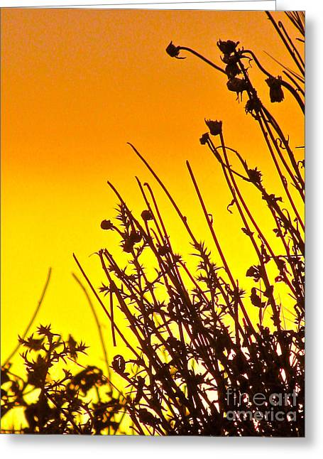 Sunset Sand-doons  Greeting Card by Debra     Vatalaro