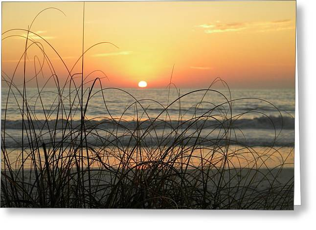 Sunset Sea Grass Greeting Card by Sean Allen