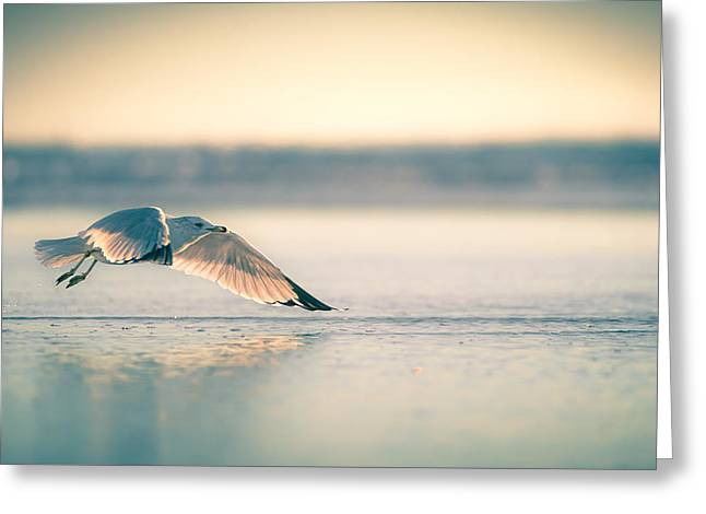Greeting Card featuring the photograph Sunset Seagull Takeoffs by T Brian Jones