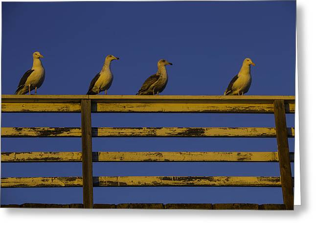 Sunset Seagulls Greeting Card by Garry Gay
