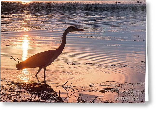Sunset Sentinel Greeting Card