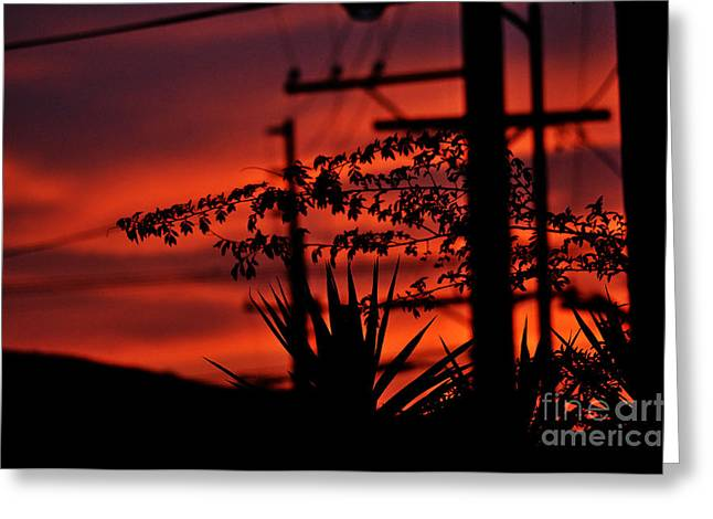Sunset Sihouettes Greeting Card by Clayton Bruster